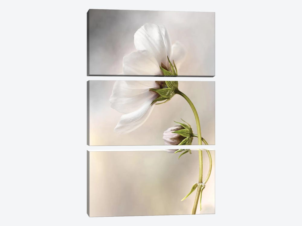 Cosmos I by Mandy Disher 3-piece Canvas Art Print