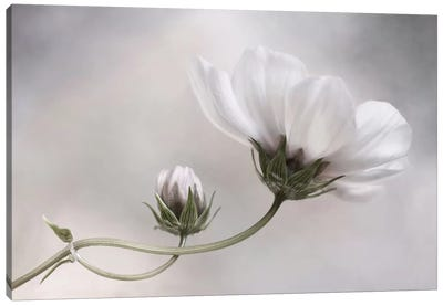 Cosmos Canvas Art Print
