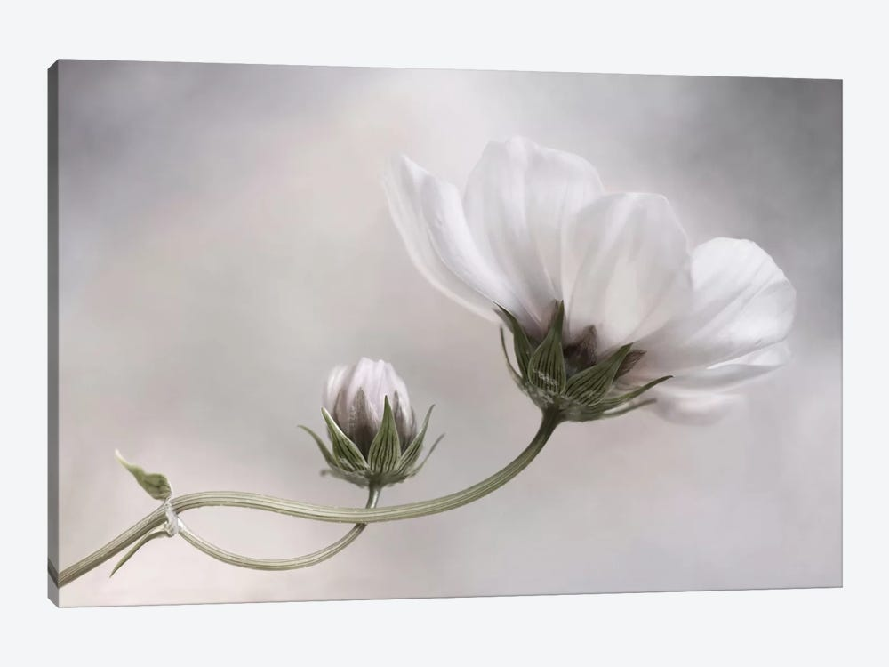 Cosmos by Mandy Disher 1-piece Canvas Artwork