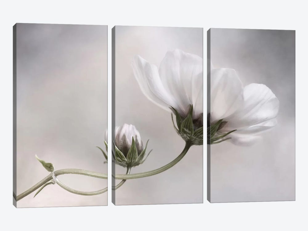 Cosmos II 3-piece Canvas Wall Art