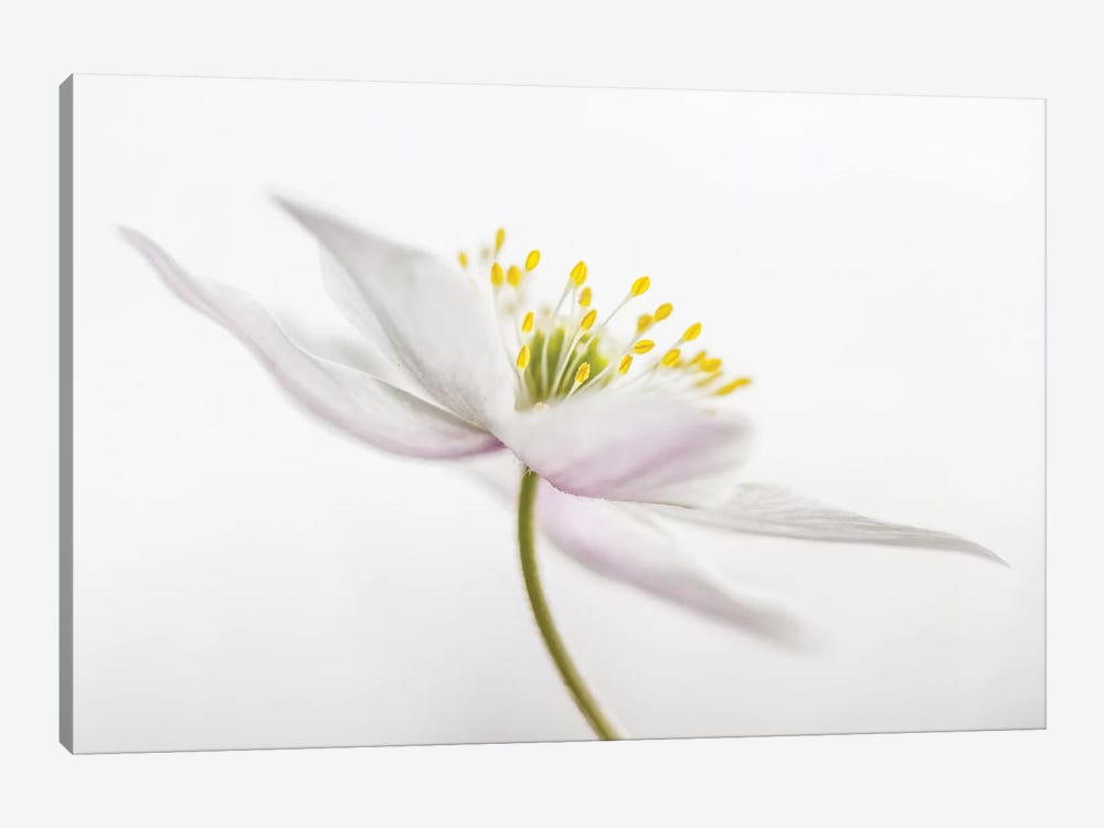 Nemorosa by Mandy Disher 1-piece Art Print