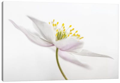 Nemorosa II Canvas Art Print