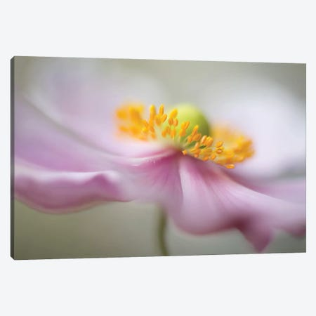 Untitled Canvas Print #OXM1729} by Mandy Disher Art Print