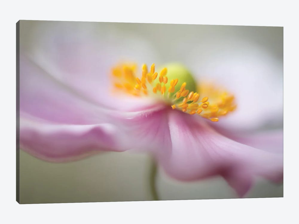 Untitled by Mandy Disher 1-piece Canvas Art Print