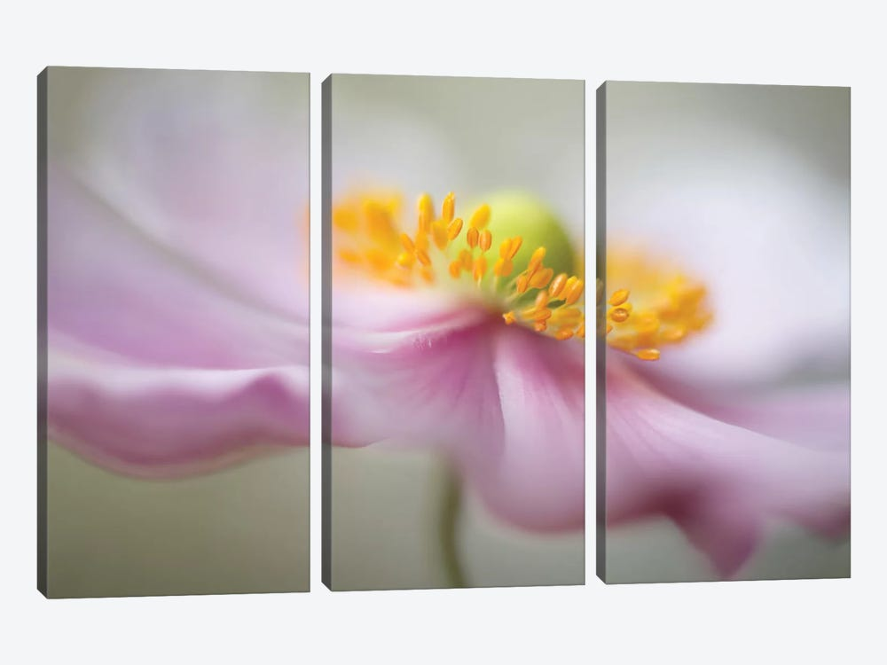 Untitled by Mandy Disher 3-piece Canvas Print