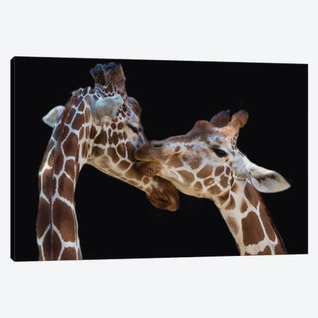 The Kiss Canvas Print #OXM1730} by Manfred Foeger Canvas Art