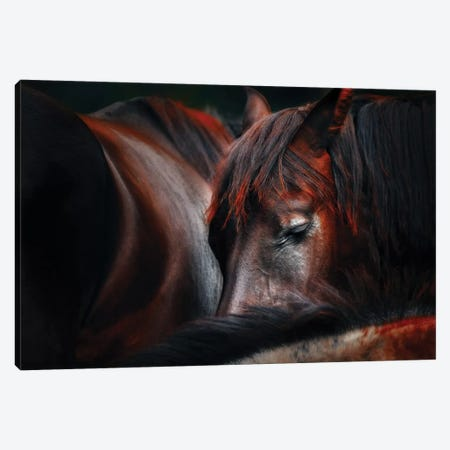 Sleep Huddle Canvas Print #OXM1767} by Martin Stantchev Canvas Artwork