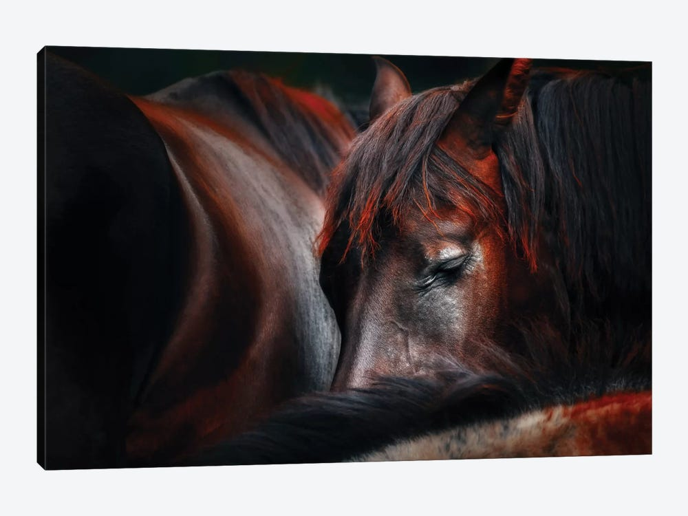 Sleep Huddle by Martin Stantchev 1-piece Canvas Print