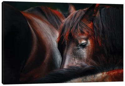 Sleep Huddle Canvas Art Print