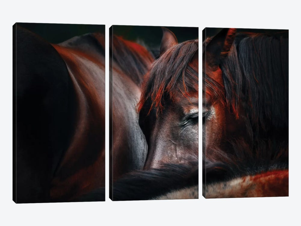 Sleep Huddle by Martin Stantchev 3-piece Canvas Print