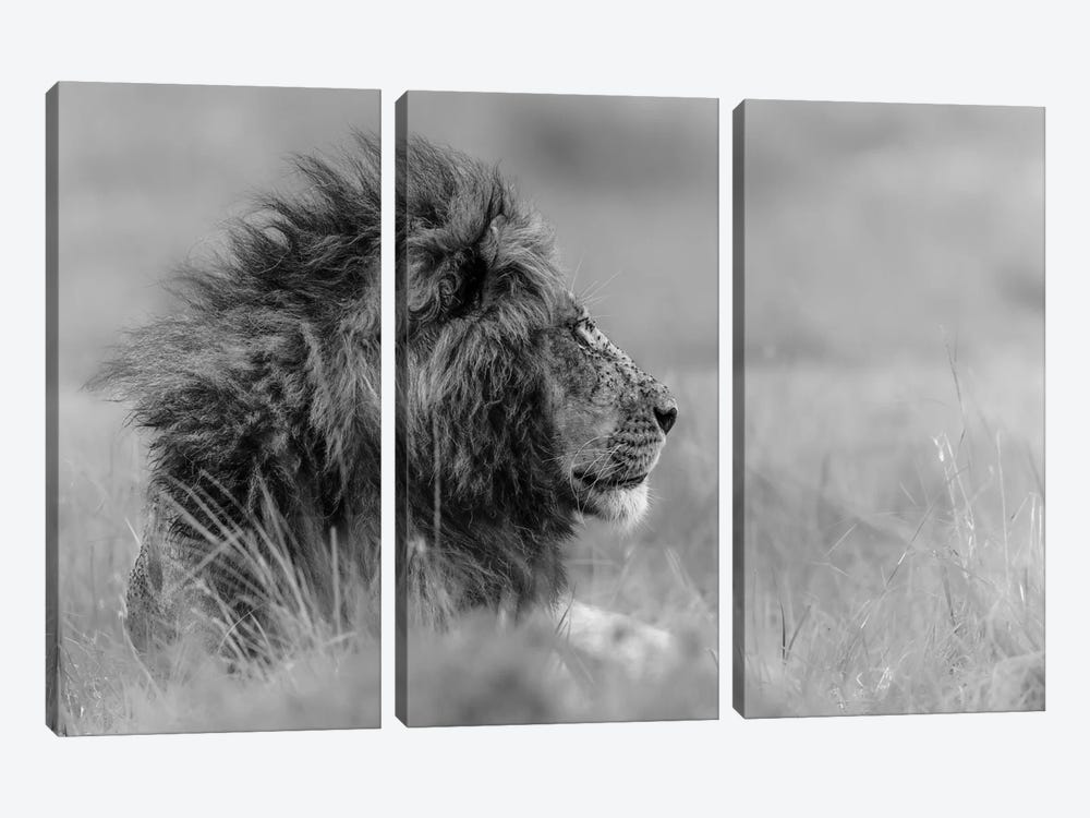 The King Is Alone by Massimo Mei 3-piece Canvas Wall Art