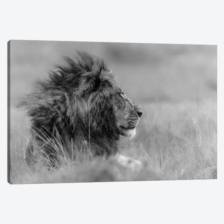 The King Is Alone Canvas Print #OXM1775} by Massimo Mei Canvas Print