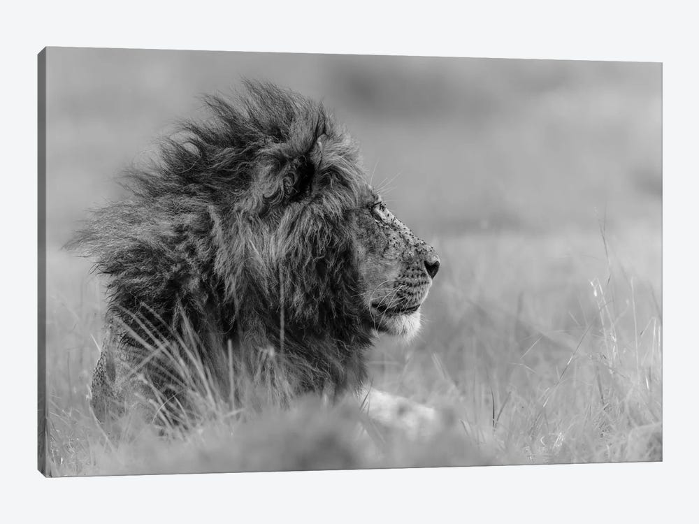 The King Is Alone by Massimo Mei 1-piece Canvas Wall Art
