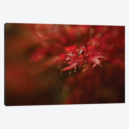Maple Canvas Print #OXM1792} by Mel Brackstone Canvas Artwork