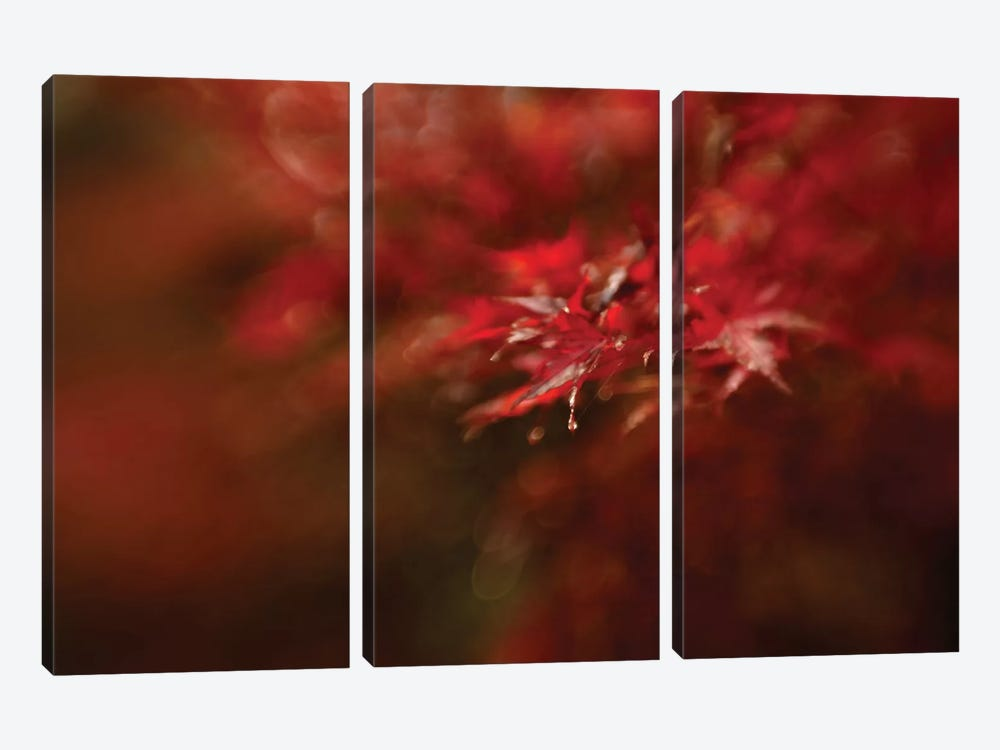 Maple by Mel Brackstone 3-piece Canvas Art Print