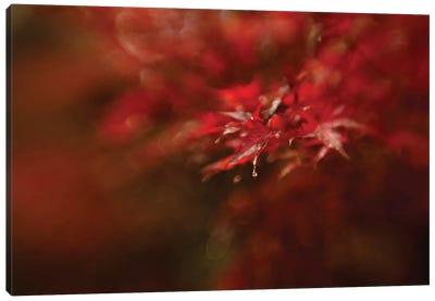 Maple Canvas Art Print
