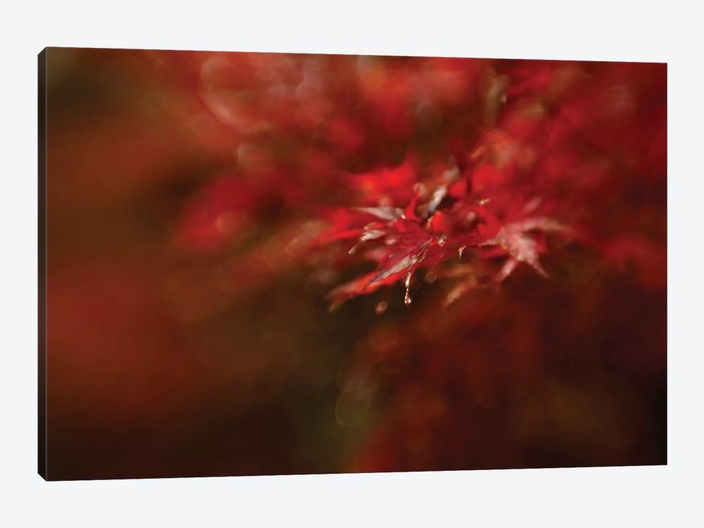 Maple by Mel Brackstone 1-piece Art Print