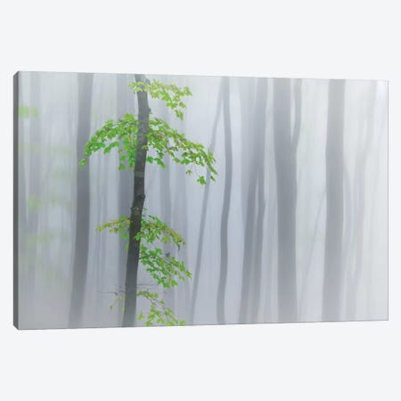 The Fog And Leaves Canvas Print #OXM1805} by Michel Manzoni Canvas Print