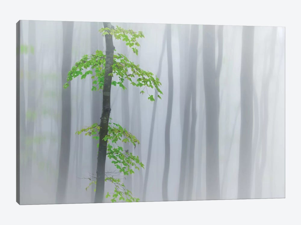 The Fog And Leaves by Michel Manzoni 1-piece Canvas Print