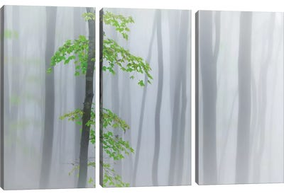 The Fog And Leaves Canvas Art Print