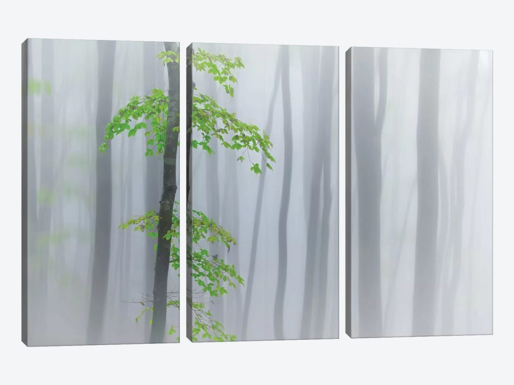 The Fog And Leaves by Michel Manzoni 3-piece Canvas Print