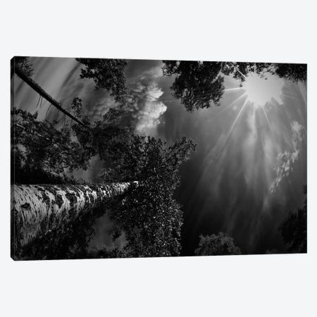 Dreaming Before The Thunder Canvas Print #OXM1813} by Mikael Jigmo Canvas Print