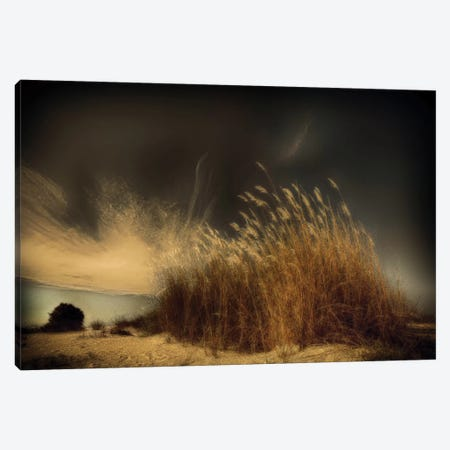 Untitled Canvas Print #OXM1818} by Miki Meir Levi Art Print