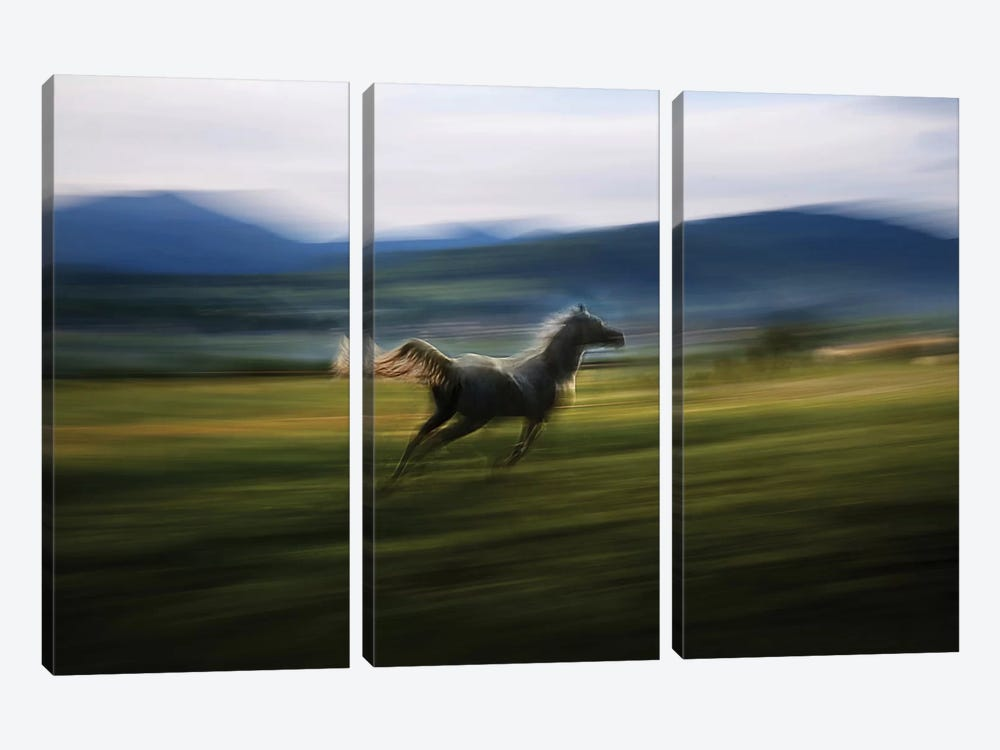 Alone by Milan Malovrh 3-piece Canvas Wall Art