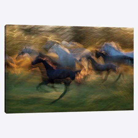 Fiery Gallop Canvas Print #OXM1820} by Milan Malovrh Canvas Artwork
