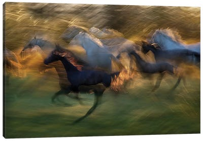 Fiery Gallop Canvas Art Print