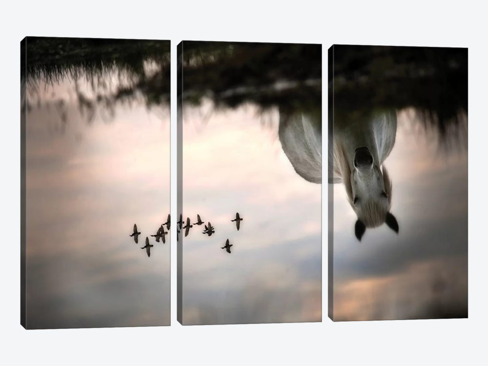 Fly by Milan Malovrh 3-piece Canvas Print
