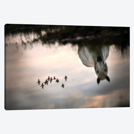 Fly Canvas Print #OXM1821} by Milan Malovrh Canvas Artwork