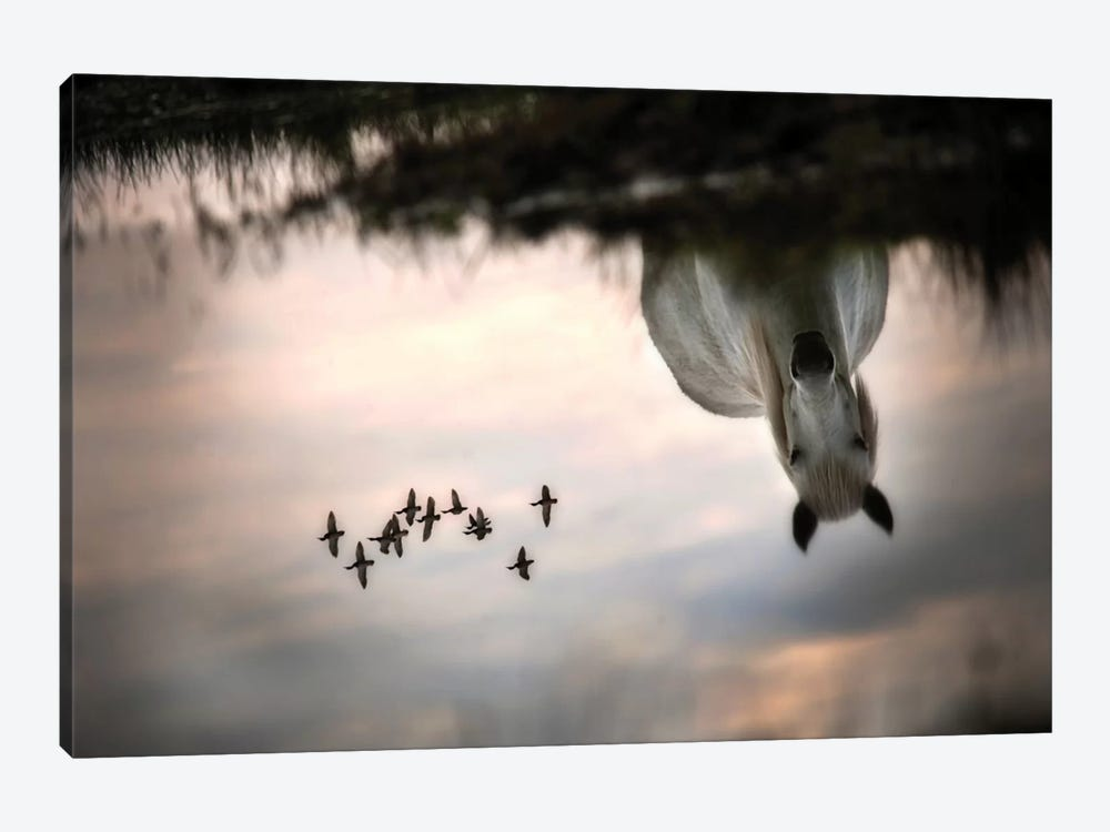 Fly by Milan Malovrh 1-piece Canvas Print