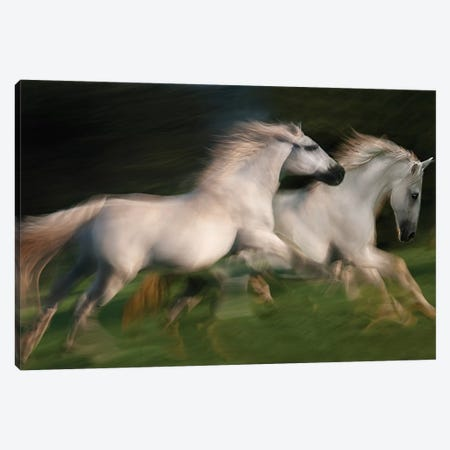 Gallop For Two Canvas Print #OXM1822} by Milan Malovrh Canvas Artwork