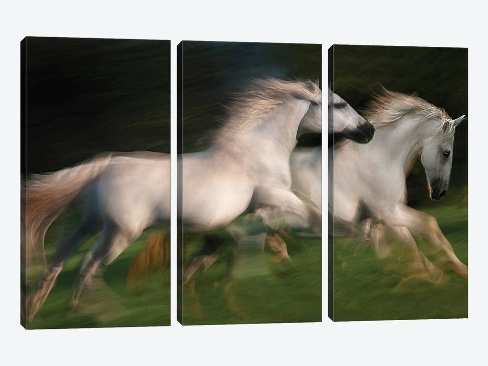 Gallop For Two by Milan Malovrh 3-piece Canvas Wall Art