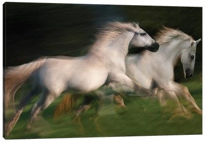 Gallop For Two Canvas Art Print