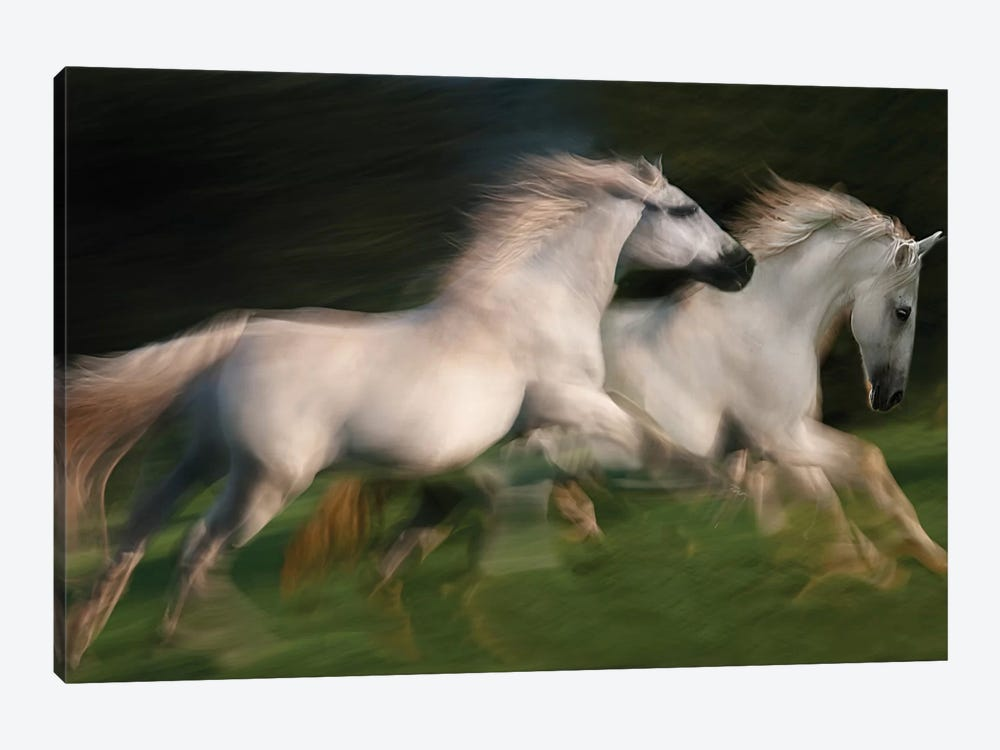 Gallop For Two by Milan Malovrh 1-piece Canvas Wall Art