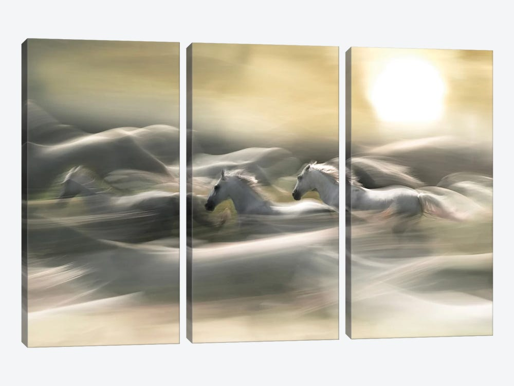 Morning Dream by Milan Malovrh 3-piece Canvas Artwork