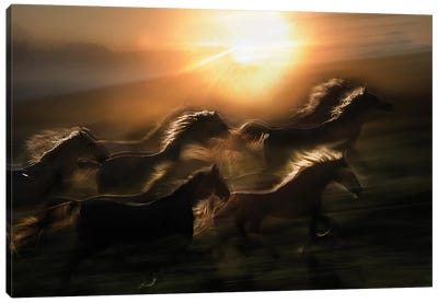 Morning Gallop Canvas Art Print