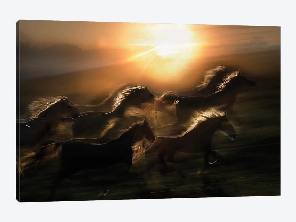 Morning Gallop by Milan Malovrh 1-piece Art Print