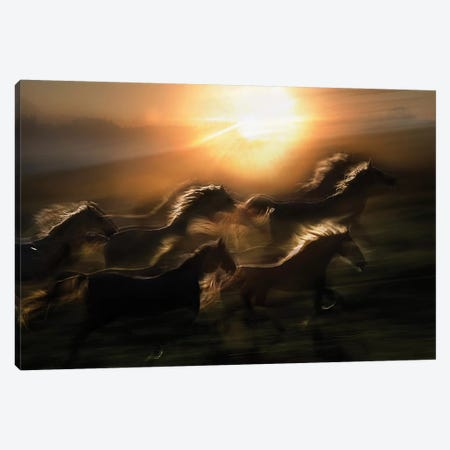 Morning Gallop Canvas Print #OXM1825} by Milan Malovrh Canvas Print