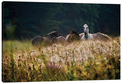 Our Garden Canvas Art Print