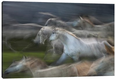 Stampedo Canvas Art Print