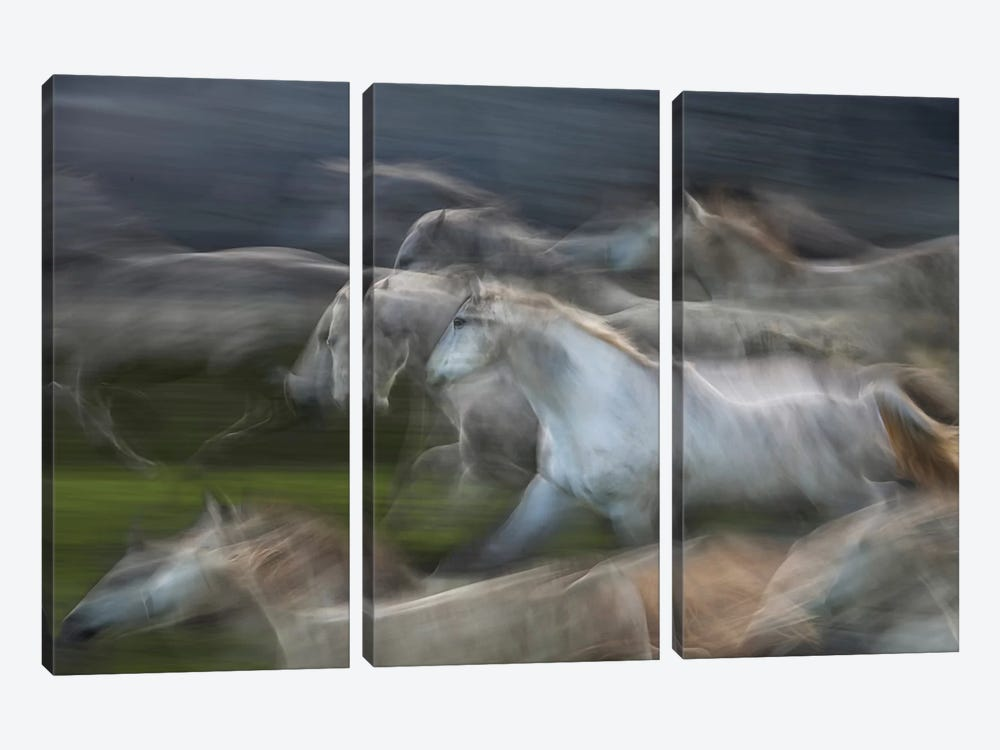 Stampedo by Milan Malovrh 3-piece Canvas Print