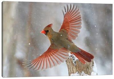 Snow Storm Canvas Art Print