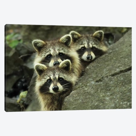 Tres Banditos Canvas Print #OXM1839} by Mircea Costina Art Print