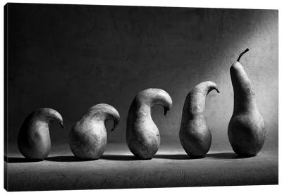 The Evolution Canvas Print #OXM186
