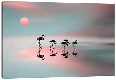 A Family Of Flamingos Canvas Art Print
