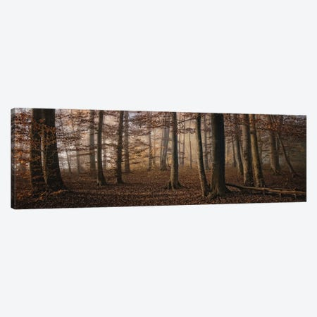 Autumn Canvas Print #OXM1890} by Norbert Maier Art Print