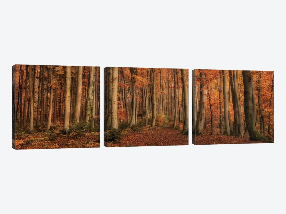 Winter's Soon To Come by Norbert Maier 3-piece Canvas Wall Art